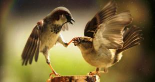 francis-bacon-o-razgovoru-ptice